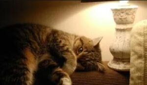 night lamp for cats