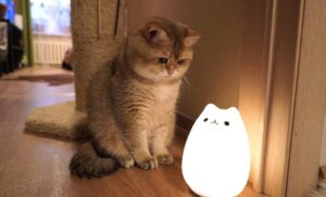 best night light for cats reviews