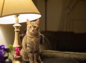 night light for kitten