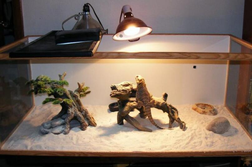 best night light for leopard geckos reviews